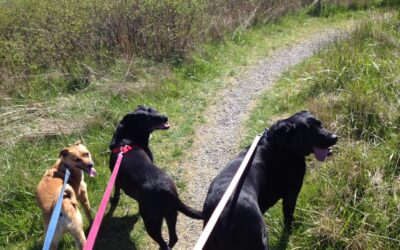 Three Dogs, The Woods, and the Path of Peace, Part 1